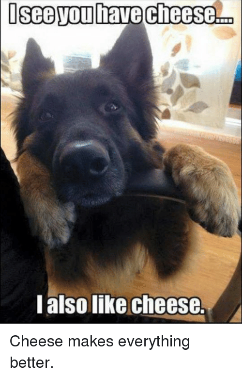 Memes, 🤖, and Cheese: Isee You have Cheese  I also like cheese. Cheese makes everything better.