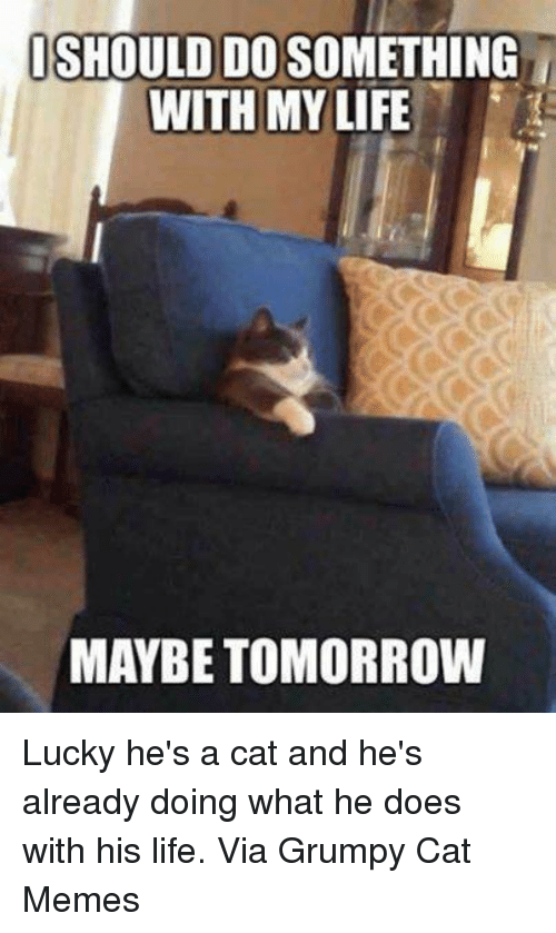 Luckiness: ISHOULDIDOSOMETHING  WITH MY LIFE  MAYBE TOMORROW Lucky he's a cat and he's already doing what he does with his life. Via Grumpy Cat Memes
