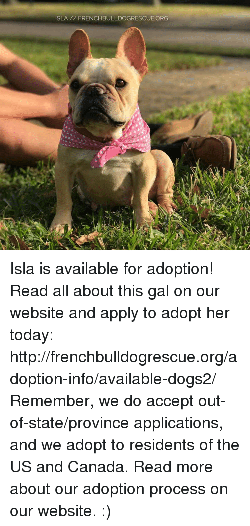 us-and-canada: ISLA FRENCHBULLDOGRESCUE.ORG Isla is available for adoption! Read all about this gal on our website <location, likes, dislikes> and apply to adopt her today: http://frenchbulldogrescue.org/adoption-info/available-dogs2/  Remember, we do accept out-of-state/province applications, and we adopt to residents of the US and Canada. Read more about our adoption process on our website. :)