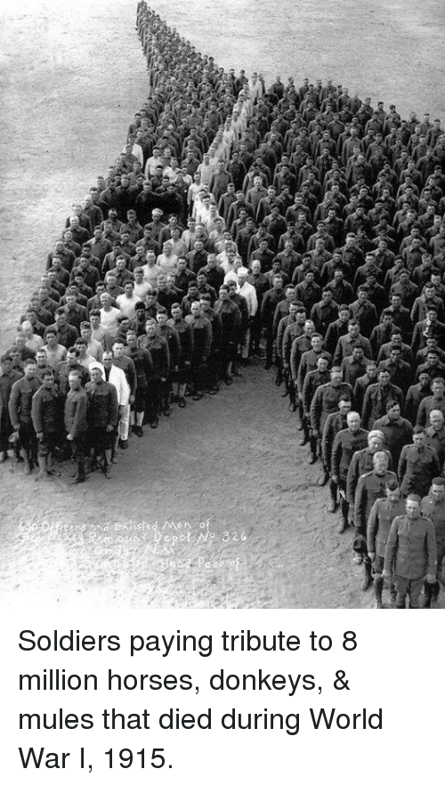 Dank, Donkey, and Horses: isted /Men . o  Depot (No 326 Soldiers paying tribute to 8 million horses, donkeys, & mules that died during World War I, 1915.