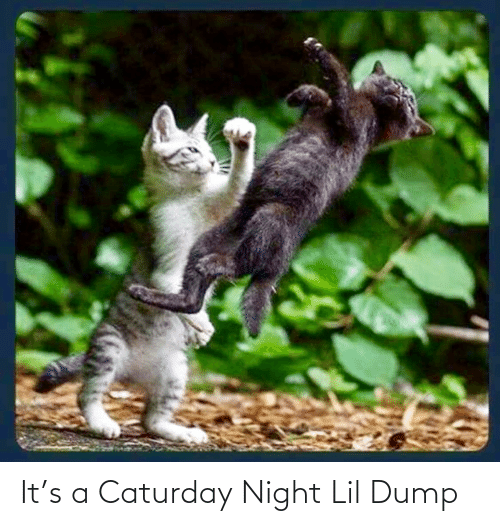 night: It's a Caturday Night Lil Dump