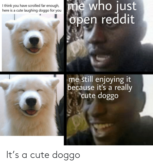 A Cute: It's a cute doggo
