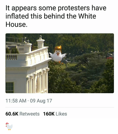 Memes, White House, and House: It appears some protesters have  inflated this behind the White  House.  11:58 AM 09 Aug 17  60.6K Retweets 160K Likes 🐓