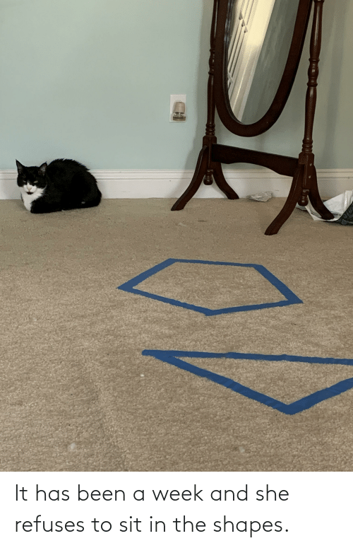 Sit In: It has been a week and she refuses to sit in the shapes.