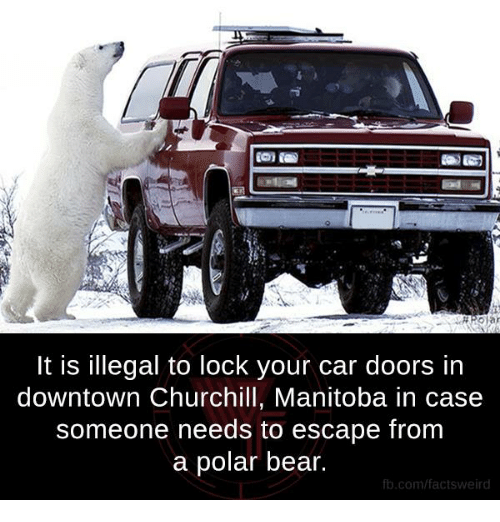 illegible: It is illegal to lock your car doors in  downtown Churchill, Manitoba in case  someone needs to escape from  a polar bear  fb.com/factsweird