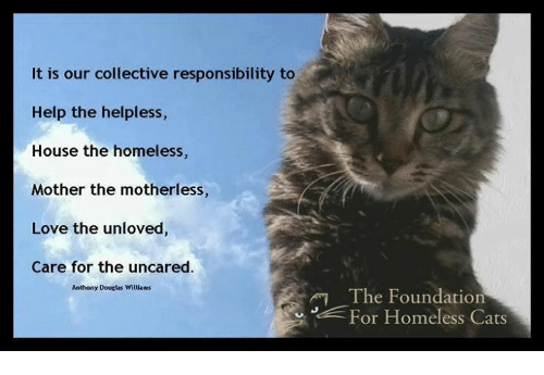 our obligation to help the homeless essay College links college reviews college essays college articles report abuse home hot topics what matters an obligation to help the homeless to help out our.