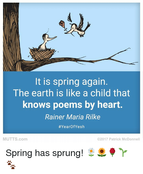 Memes, 🤖, and Earthing: It is spring again  The earth is like a child that  knows poems by heart.  Rainer Maria Rilke  Year Yesh  MUTTS com  2017 Patrick McDonnell Spring has sprung! 🌼🌻🌹🌱🐾