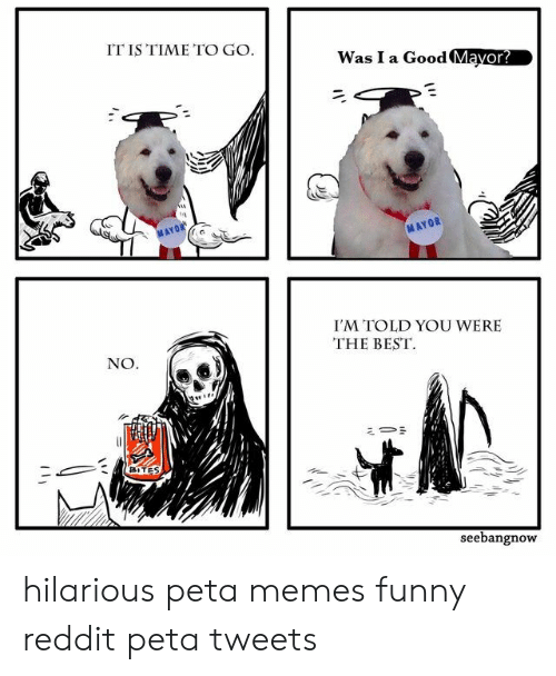 mayor: IT IS TIME TO GO  Was I a Good Mayor?  MAYOR  I'M TOLD YOU WERE  THE BEST  NO  seebangnoW hilarious peta memes funny reddit peta tweets