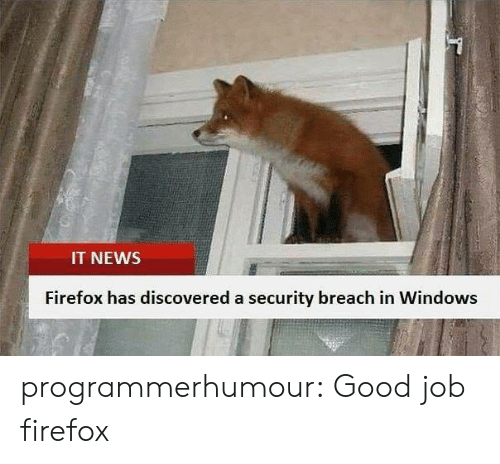 Firefox: IT NEWS  Firefox has discovered a security breach in Windows programmerhumour: Good job firefox