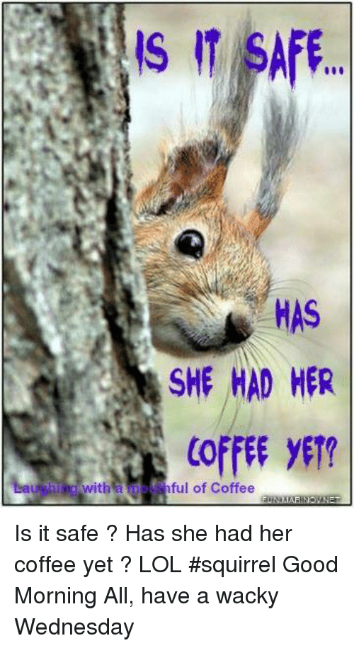 wacky wednesday: IT SAFE  HAS  SHE HAD HER  COFFEE ET  with  ful of Coffee Is it safe ? Has she had her coffee yet ?    LOL  #squirrel  Good Morning All, have a wacky Wednesday