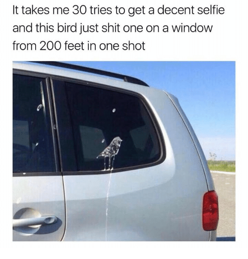 Bailey Jay, Dank, and Selfie: It takes me 30 tries to get a decent selfie  and this bird just shit one on a window  from 200 feet in one shot