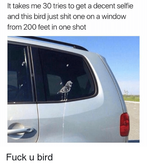 Bailey Jay, Funny, and Selfie: It takes me 30 tries to get adecent selfie  and this bird just shit one on a window  from 200 feet in one shot Fuck u bird