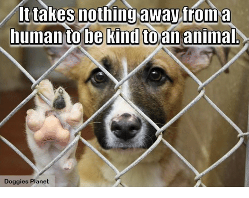 Animals, Memes, and Animal: It takes nothing away from a  human to be kind toan animal  Doggies Planet