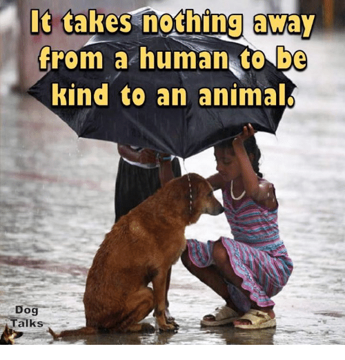 animated dog: It takes nothing away  from a human to be  kind to an animal  Dog  Talks