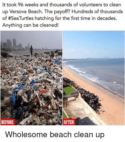 Beach, Time, and Wholesome: It took 96 weeks and thousands of volunteers to clean  up Versova Beach. The payoff? Hundreds of thousands  of #SeaTurtles hatching for the first time in decades.  Anything can be cleaned!  BEFORE  AFTER Wholesome beach clean up