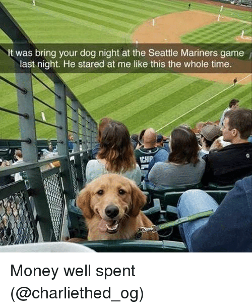 mariners: It was bring your dog night at the Seattle Mariners game  last night. He stared at me like this the whole time.  CHIP Money well spent (@charliethed_og)