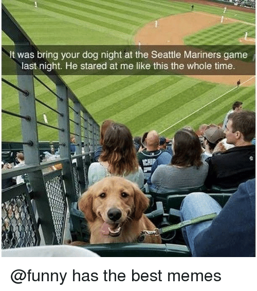 mariners: It was bring your dog night at the Seattle Mariners game  last night. He stared at me like this the whole time.  CHIP @funny has the best memes