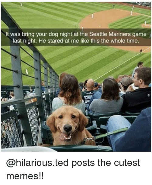 mariners: It was bring your dog night at the Seattle Mariners game  last night. He stared at me like this the whole time  CHIP @hilarious.ted posts the cutest memes!!