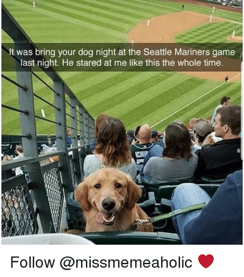 mariners: It was bring your dog night at the Seattle Mariners game  last night. He stared at me like this the whole time  CHIP Follow @missmemeaholic ❤