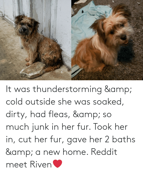 junk: It was thunderstorming & cold outside she was soaked, dirty, had fleas, & so much junk in her fur. Took her in, cut her fur, gave her 2 baths & a new home. Reddit meet Riven❤