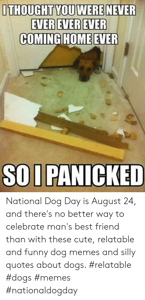 Silly Quotes: ITHOUGHT YOU WERE NEVER  EVEREVER EVER  COMING HOME EVER  SOI PANICKED National Dog Day is August 24, and there's no better way to celebrate man's best friend than with these cute, relatable and funny dog memes and silly quotes about dogs.  #relatable #dogs #memes #nationaldogday