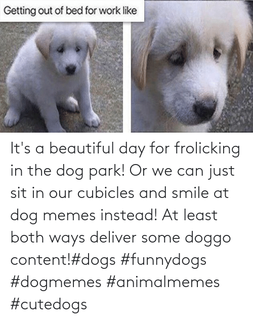 Beautiful, Dogs, and Memes: It's a beautiful day for frolicking in the dog park! Or we can just sit in our cubicles and smile at dog memes instead! At least both ways deliver some doggo content!#dogs #funnydogs #dogmemes #animalmemes #cutedogs
