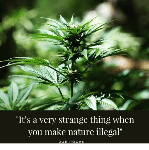 """Illegalize: """"It's a very strange thing when  you make nature illegal""""  JOE ROGAN"""