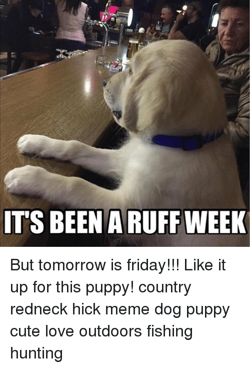 Tomorrow Is Friday: IT'S BEEN A RUFF WEEK But tomorrow is friday!!! Like it up for this puppy! country redneck hick meme dog puppy cute love outdoors fishing hunting