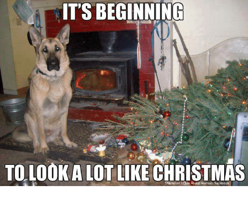 beginning to look a lot like christmas: ITS BEGINNING  TO LOOK A LOT LIKE CHRISTMAS  Shared on Care About Animals/facebook