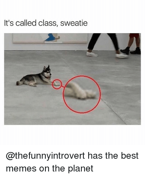 Funny, Memes, and Best: It's called class, sweatie @thefunnyintrovert has the best memes on the planet