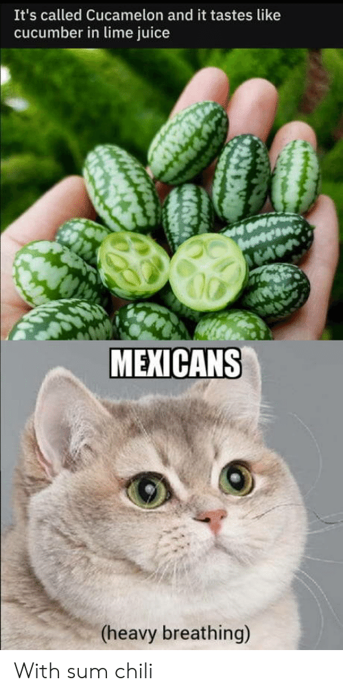 chili: It's called Cucamelon and it tastes like  cucumber in lime juice  MEXICANS  (heavy breathing) With sum chili