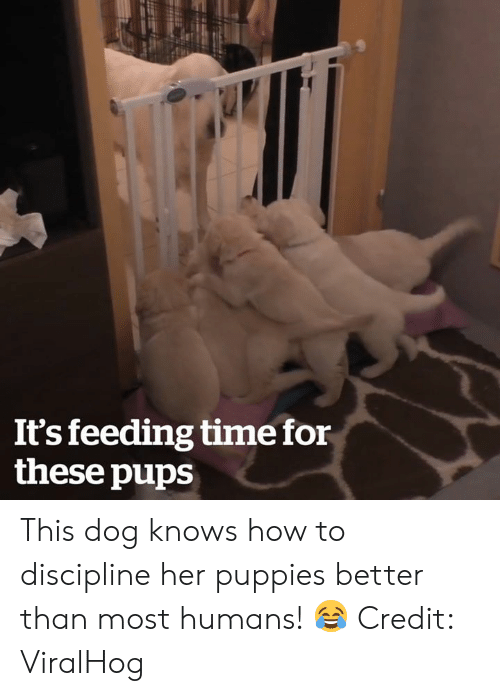 discipline: It's feeding time for  these pups This dog knows how to discipline her puppies better than most humans! 😂  Credit: ViralHog