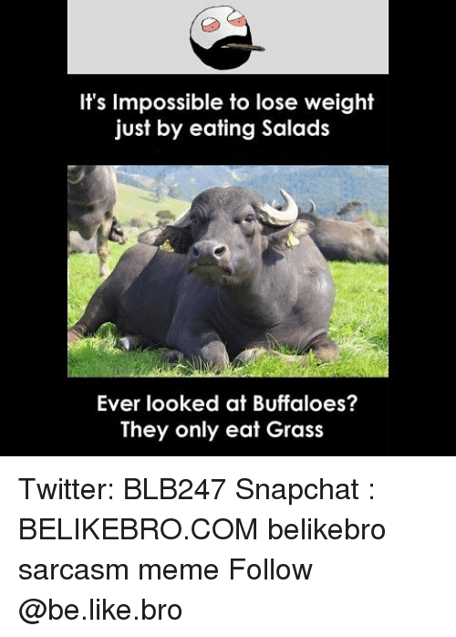 Be Like, Meme, and Memes: It's Impossible to lose weight  just by eating Salads  Ever looked at Buffaloes?  They only eat Grass Twitter: BLB247 Snapchat : BELIKEBRO.COM belikebro sarcasm meme Follow @be.like.bro