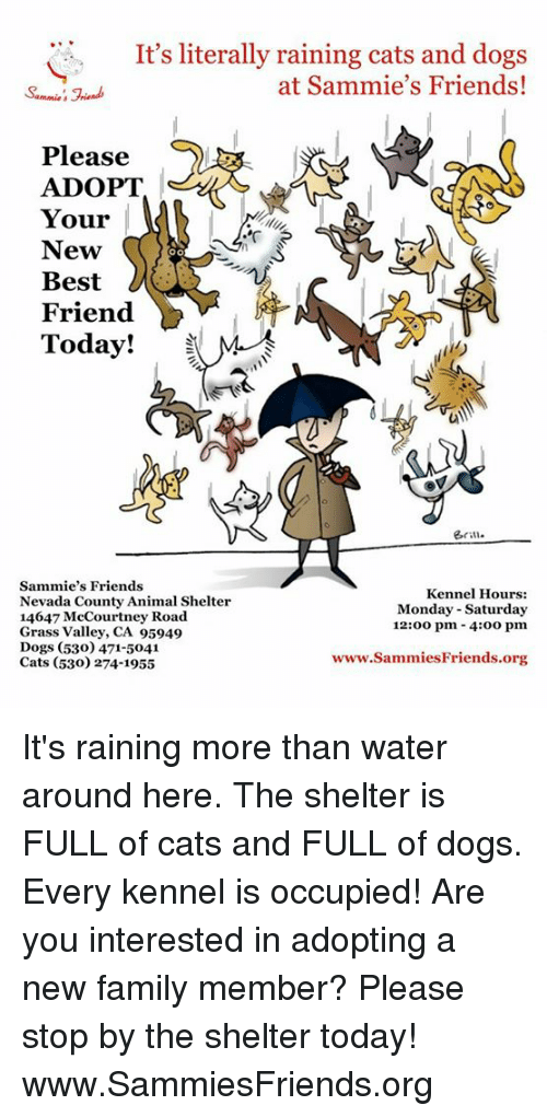 rain cat: It's literally raining cats and dogs  at Sammie's Friends!  Please  ADOPT  Your  New  Best  Friend  Today!  eriu.  Sammie's Friends  Kennel Hours:  Nevada County Animal Shelter  Monday-Saturday  14647 McCourtney Road  12:00 pm 4:oo pm  Grass Valley, CA 95949  Dogs (530) 471-5041  www.Sammies Friends org  Cats (530) 274-1955 It's raining more than water around here.  The shelter is FULL of cats and FULL of dogs.  Every kennel is occupied!  Are you interested in adopting a new family member?  Please stop by the shelter today!  www.SammiesFriends.org