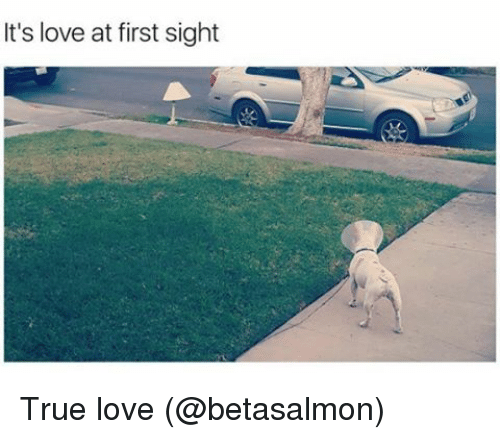 Love, Memes, and True: It's love at first sight True love (@betasalmon)
