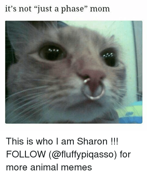 "Animated Memes: it's not ""just a phase"" mom This is who I am Sharon !!! FOLLOW (@fluffypiqasso) for more animal memes"