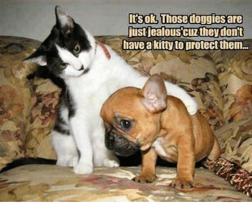 Jealous, Memes, and 🤖: Its ok, Those doggies are  just jealous cuz they don't  have a kitty to protectthem.