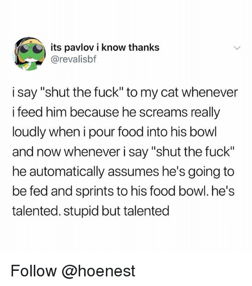 "Food, Memes, and Fuck: its pavlov i know thanks  @revalisbf  i say ""shut the fuck"" to my cat whenever  feed him because he screams really  loudly when i pour food into his bowl  and now whenever i say ""shut the fuck""  he automatically assumes he's going to  be fed and sprints to his food bowl. he's  talented. stupid but talented Follow @hoenest"