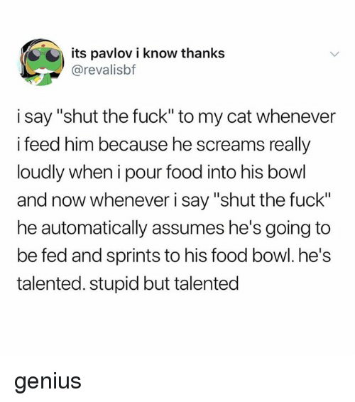 "Food, Tumblr, and Fuck: its pavlov i know thanks  @revalisbf  i say ""shut the fuck"" to my cat whenever  i feed him because he screams really  loudly when i pour food into his bowl  and now whenever i say ""shut the fuck""  he automatically assumes he's going to  be fed and sprints to his food bowl. he's  talented. stupid but talented genius"