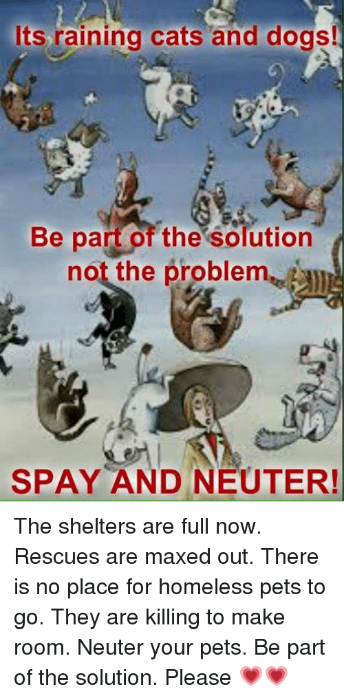 rain cat: Its raining cats and dogs!  Be pan of the solution  not the problem  SPAY AND NEUTER! The shelters are full now. Rescues are maxed out. There is no place for homeless pets to go. They are killing to make room. Neuter your pets.  Be part of the solution. Please 💗💗