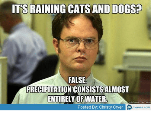 rain cat: ITS RAINING CATS AND DOGS?  FALSE  PRECIPITATION CONSISTSALMOST  ENTIRELY OF WATER  ckmenne.com  memez com  Posted By: Christy Cryer