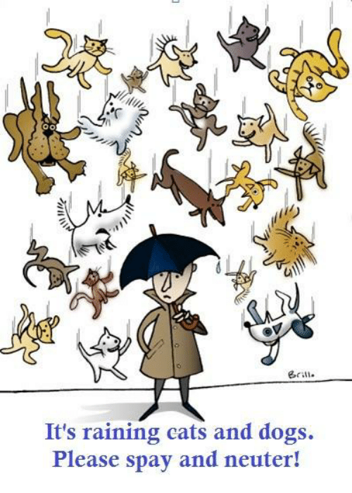 rain cat: It's raining cats and dogs.  Please spay and neuter!
