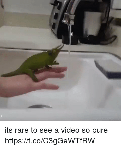 Video, Relatable, and Rare: its rare to see a video so pure https://t.co/C3gGeWTfRW