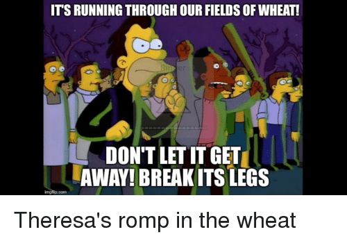 its running our fields of wheat dontletitget away breakits legs 22321625 its running our fields of wheat! dontletitget away! breakits legs