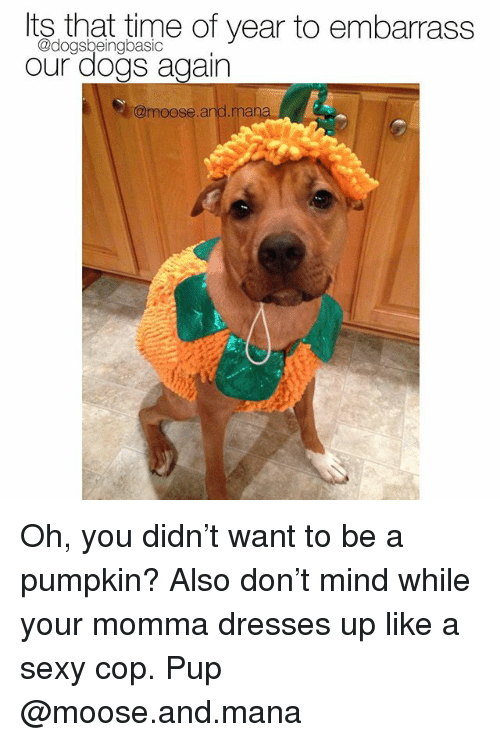 Dogs, Memes, and Sexy: Its that time of year to embarrass  @dogsbeingbasic  our dogs again  @moose.and.man Oh, you didn't want to be a pumpkin? Also don't mind while your momma dresses up like a sexy cop. Pup @moose.and.mana