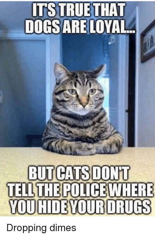 dimes: ITS TRUE THAT  DOGSARE LOYAL  BUT CATSDONT  TELL THE POLICEWHERE  YOU HIDE YOUR DRUGS Dropping dimes