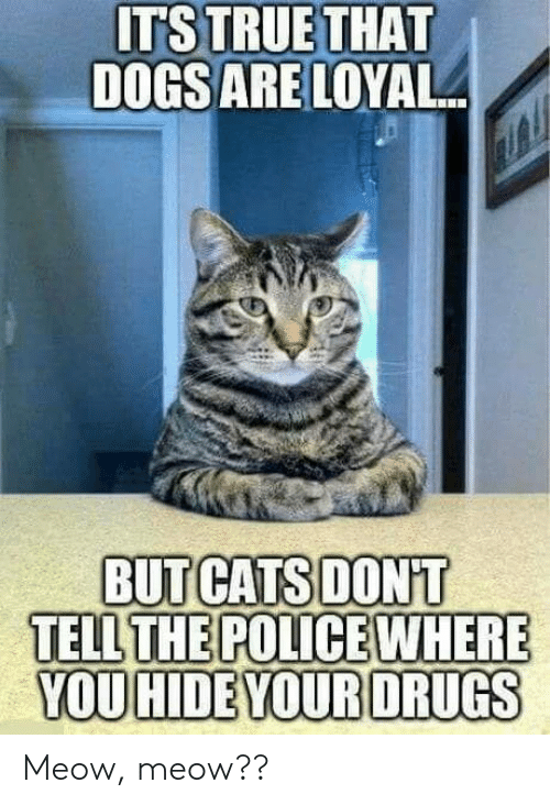 meow meow: ITS TRUETHAT  DOGSARE LOYAL  BUT CATS DONT  TELL  YOU HIDE YOUR DRUGS Meow, meow??