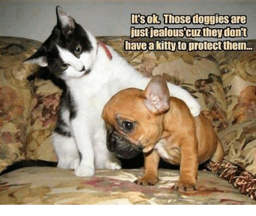 Memes, 🤖, and Them: Itsok, Those doggies are  ust jealouscuzthey dont  iave a kity to protect them