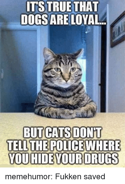 Cats, Police, and Tumblr: ITSTRUETHAT  DOGSARE LOYAL  We  BUT CATS DONT  TELL THE POLICE WHERE  YOU HIDEYOURDRUGS memehumor:  Fukken saved