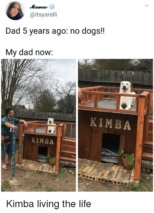 Living The: @itsyarelli  Dad 5 years ago: no dogs!!  My dad now:  KIMBA  KIMBA Kimba living the life